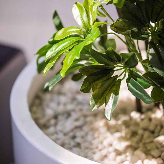Plantes et pots
